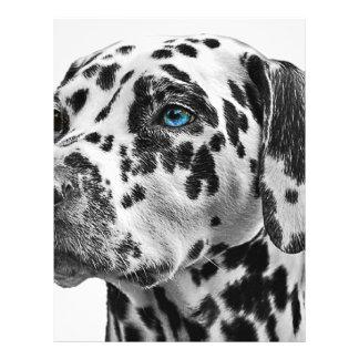 Dalmatian hund brevhuvud