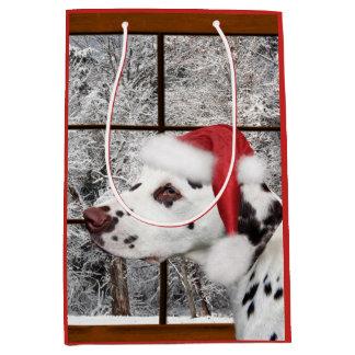 Dalmatian jul