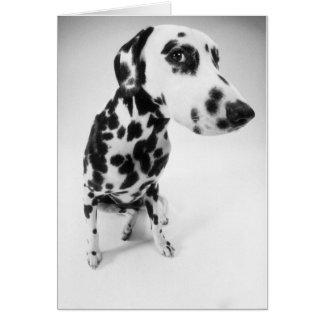 Dalmatian produkter hälsningskort