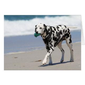Dalmatian - solo hälsningskort