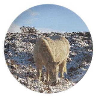Dartmoor ponny Grazeing i snö Tallrik