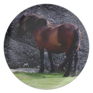 Dartmoor ponny som beskyddar på benbackestenar tallrik