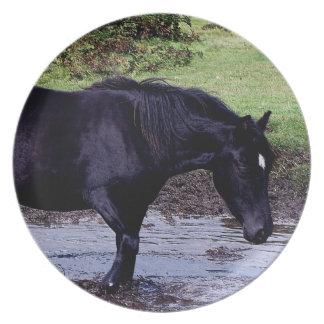 Dartmoor ponny Wadeing, i att bevattna hål Tallrik