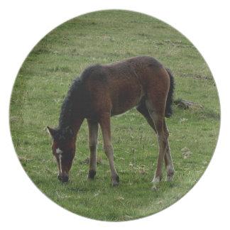 Dartmoor ponnyföl Grazeing Summer.2. Tallrik