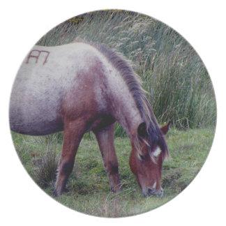 Dartmoor ponnyGrazeing tidigt Autunm Tallrik