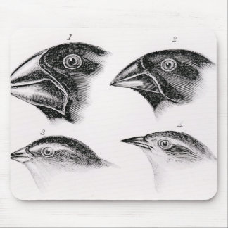 Darwins fågelobservationer musmatta