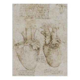 Das Vinci anatomi för människahjärta skissar Vykort