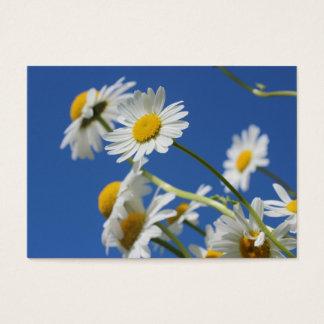 Dasy blomma