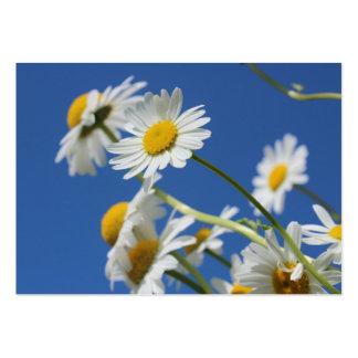 Dasy blomma set av breda visitkort