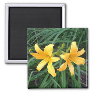"""DAYLILY""""Downey"""" guld- Duo --- Magnet"""