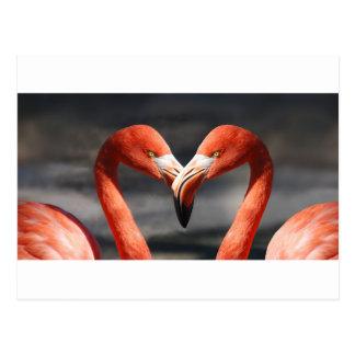 De elegent fåglarna - symbolet för kärlek vykort