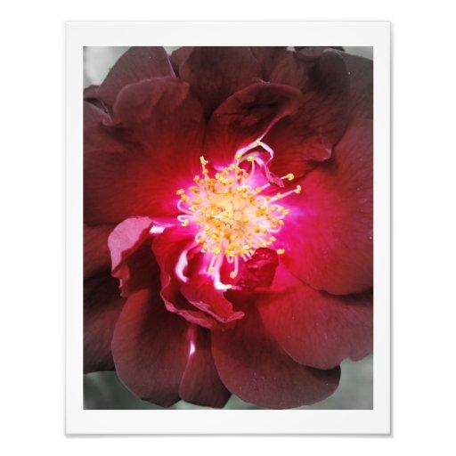 De inre avfyrar - röd rosfotografi fotografier