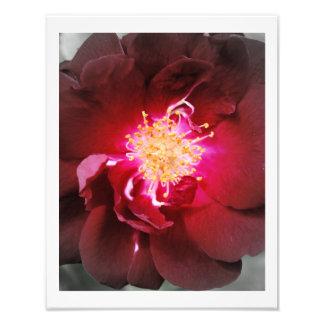 De inre avfyrar - röd rosfotografi fototryck