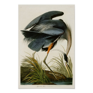De underbara blåttHeronJohn Audubon fåglarna av Poster