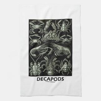 Decapods Ernest Haeckel Artforms av naturen Kökshanddukar