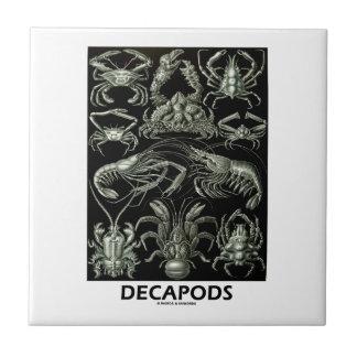 Decapods Ernest Haeckel Artforms av naturen Liten Kakelplatta
