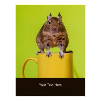 Degu sitta på en mugg vykort