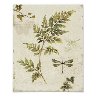 Dekorativa Ferns och en slända Poster
