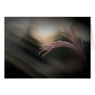Dekorativt gräs noterar kort
