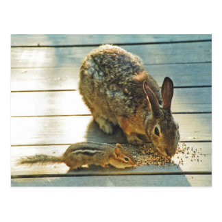 Dela för kanin och för jordekorre vykort