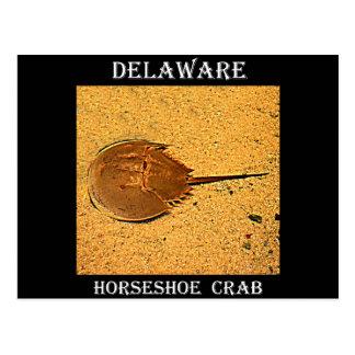 Delaware hästskokrabba vykort