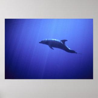 Delfin Poster