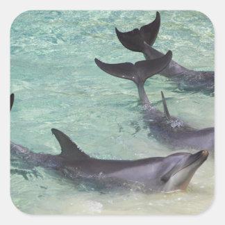 Delfiner havsvärld, Gold Coast, Queensland, Fyrkantigt Klistermärke