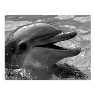 Delfinhuvud i öppet svartvitt för vattenmun vykort