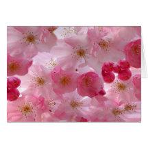 Delikat körsbärsröda blommar noterar kort