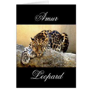 Den Amur leoparden Hälsningskort
