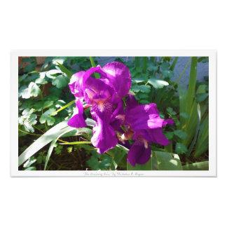 """Den ankommande irisen,"" blom- dekor Fototryck"