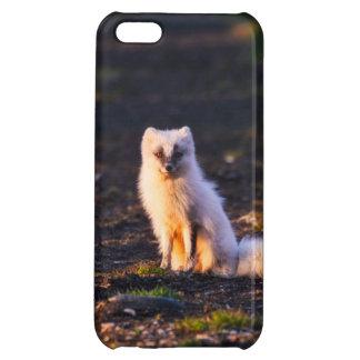 Den arktiska räven iPhone 5C mobil skal