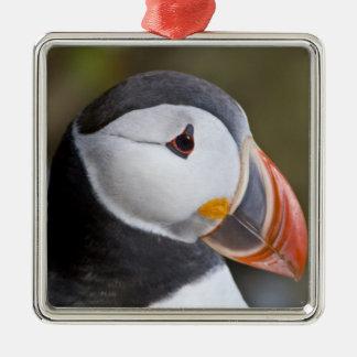 Den atlantiska puffinen, en pelagic seabird som julgransprydnad metall