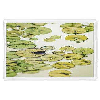 Den avslappnande gröna liljan vadderar dammväntan bricka