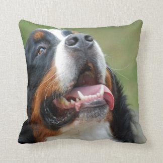 Den Berner Sennenhund hunden kudder Prydnadskudde