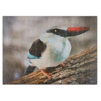 Den blått gick mot Kingfisherfågeln fotograferar