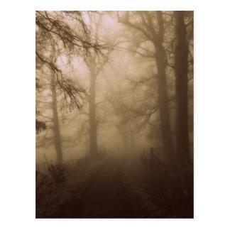 Den dimmiga morgonen går i skogen - fotografera vykort