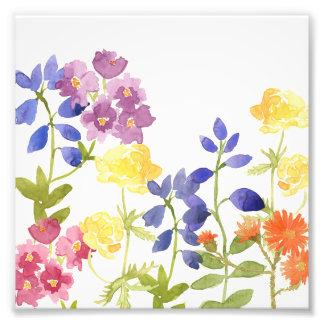 Den färgglada vilden blommar akvarellfototrycket fototryck