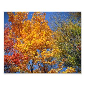 Den färgrika höstTreetopsnaturen landskap fotoet Fotografi