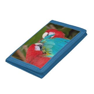 Den färgrika macawen mekaniskt säga efter plånboke