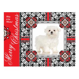 Den fluffiga hunden önskar lite dig jul för en vit vykort