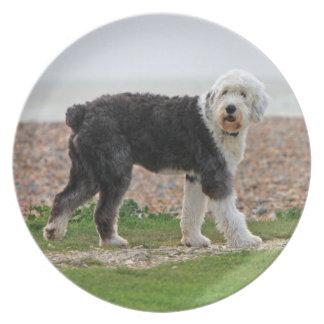 Den gammala engelska Sheepdoghunden pläterar, det Tallrik