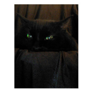 Den gröna katten synar vykortet vykort