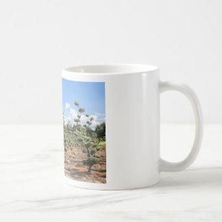 Den härliga topiaryen formar i barrträd kaffemugg