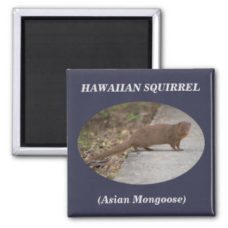 Den hawaianska ekorren (asiatisk mungor) kvadrerar