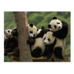 Den jätte- pandaen behandla som ett barn Ailuropod Vykort