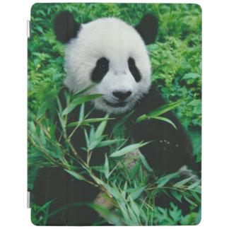 Den jätte- Pandaungen äter bambu i busken, iPad Skydd