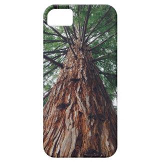 Den Kalifornien redwoodträdtelefonen täcker iPhone 5 Cases