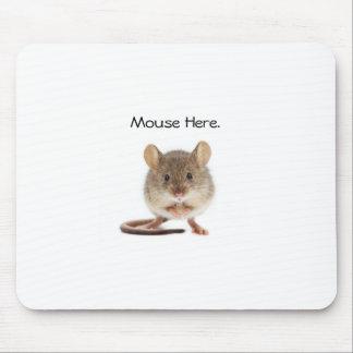 Den kalla musen vadderar mus mattor