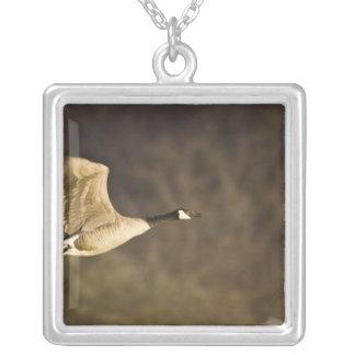 Den Kanada gåsen tar av för flyg i våtmarker Silverpläterat Halsband